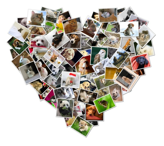 collage-heart-2